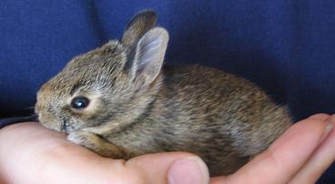 tiny_bunny.jpg