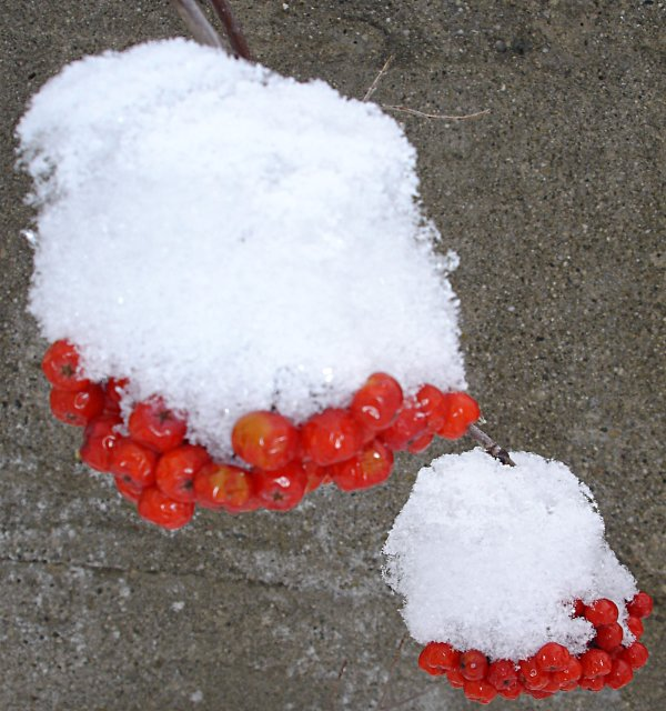 rowan berry snow hats, guelph, on