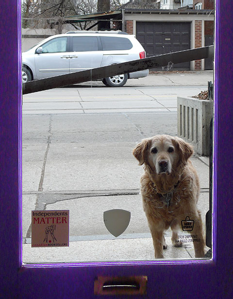 dog outside Another Story on Roncesvalles