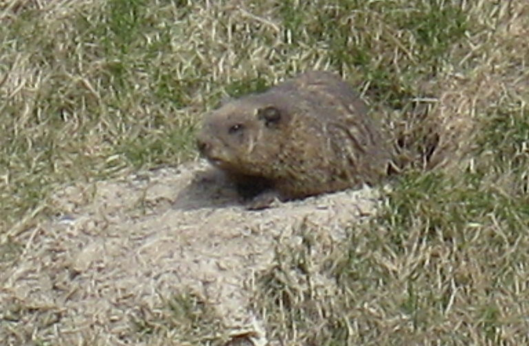 first groundhog