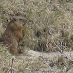 second groundhog