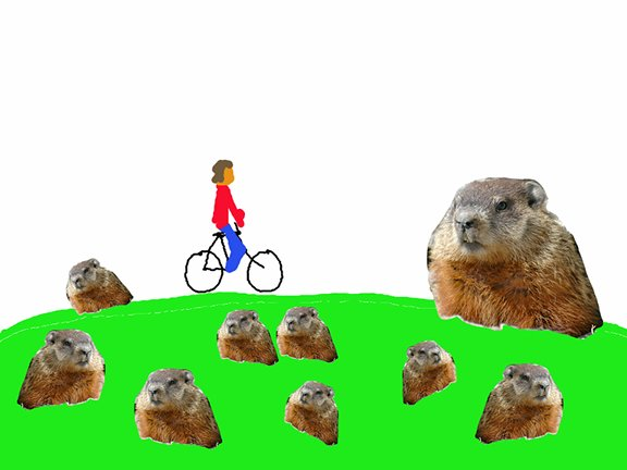 I rode my bike last night and I saw nine groundhogs