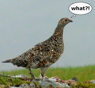 wish_we_had_our_ptarmigan