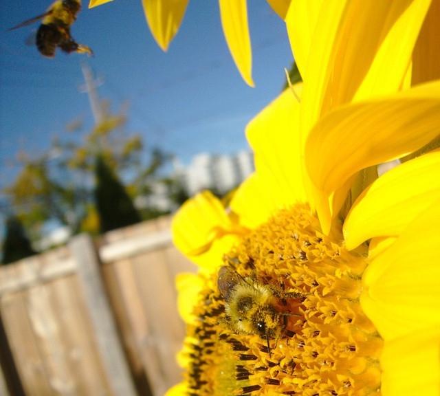 bee fall