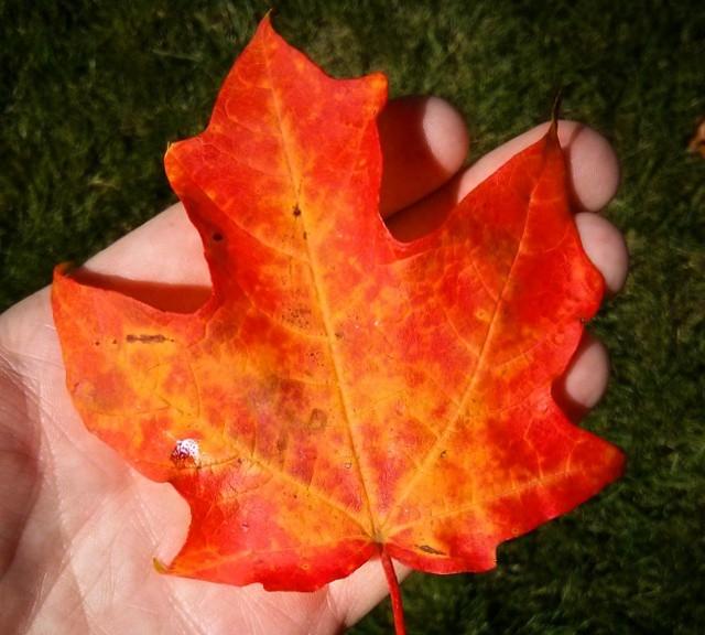Hey little leaf ...