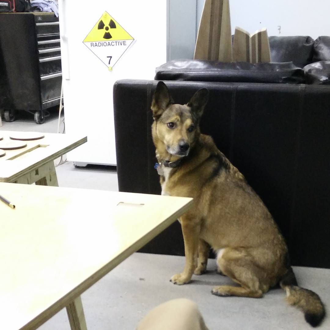 Max, official Dog of Protolab, waits by the not-radioactive fridge