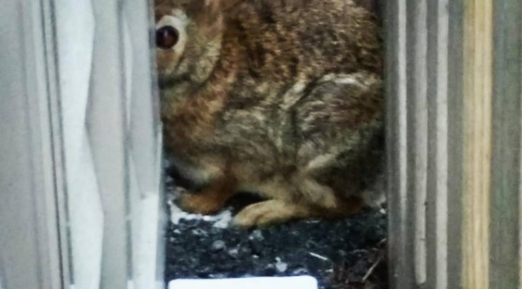 Rudiments of Hiding (bunny edition)