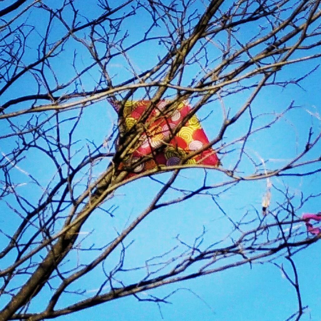 The sad sight of a treed kite