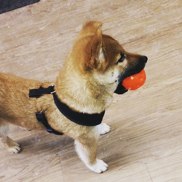 a good fren … #doge