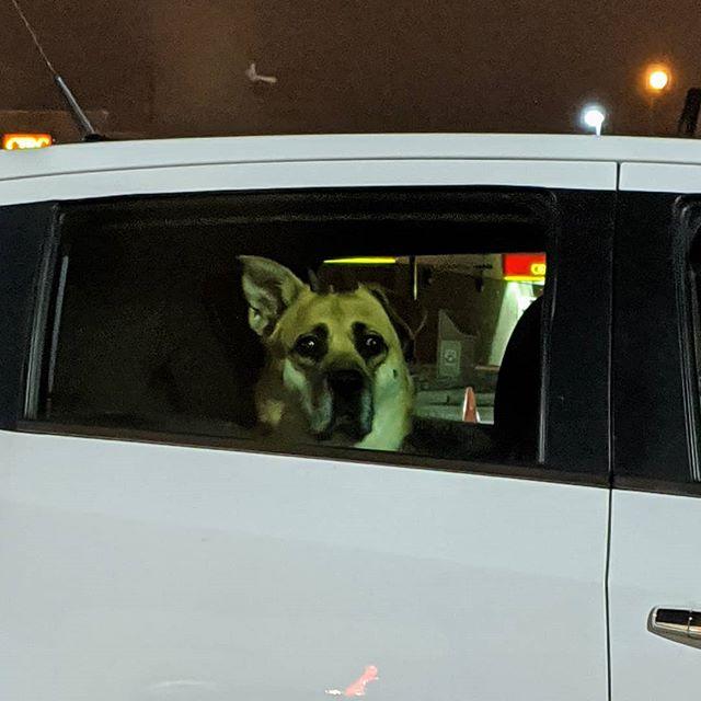 doggo waits