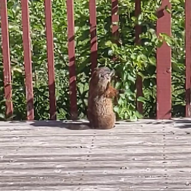 groundhog helps with the pruning